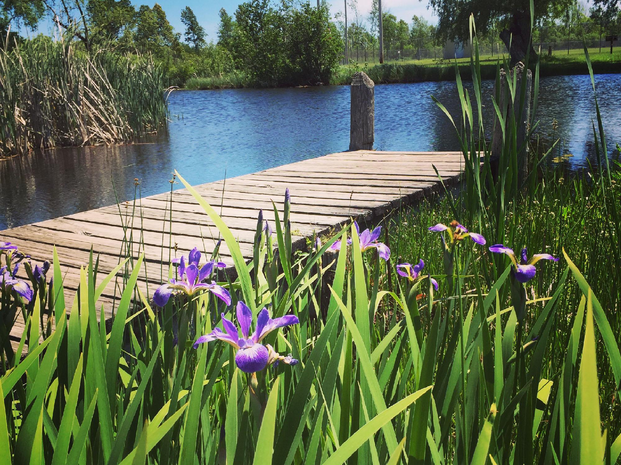 Cedar River Marina Park